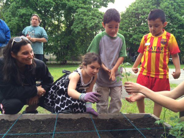 planting tomatos