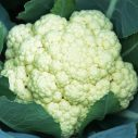 Indo chinese cauliflower